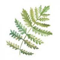 icon-leaf.jpg